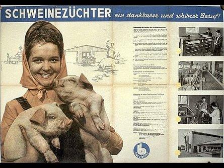 bd_schwein1kl1